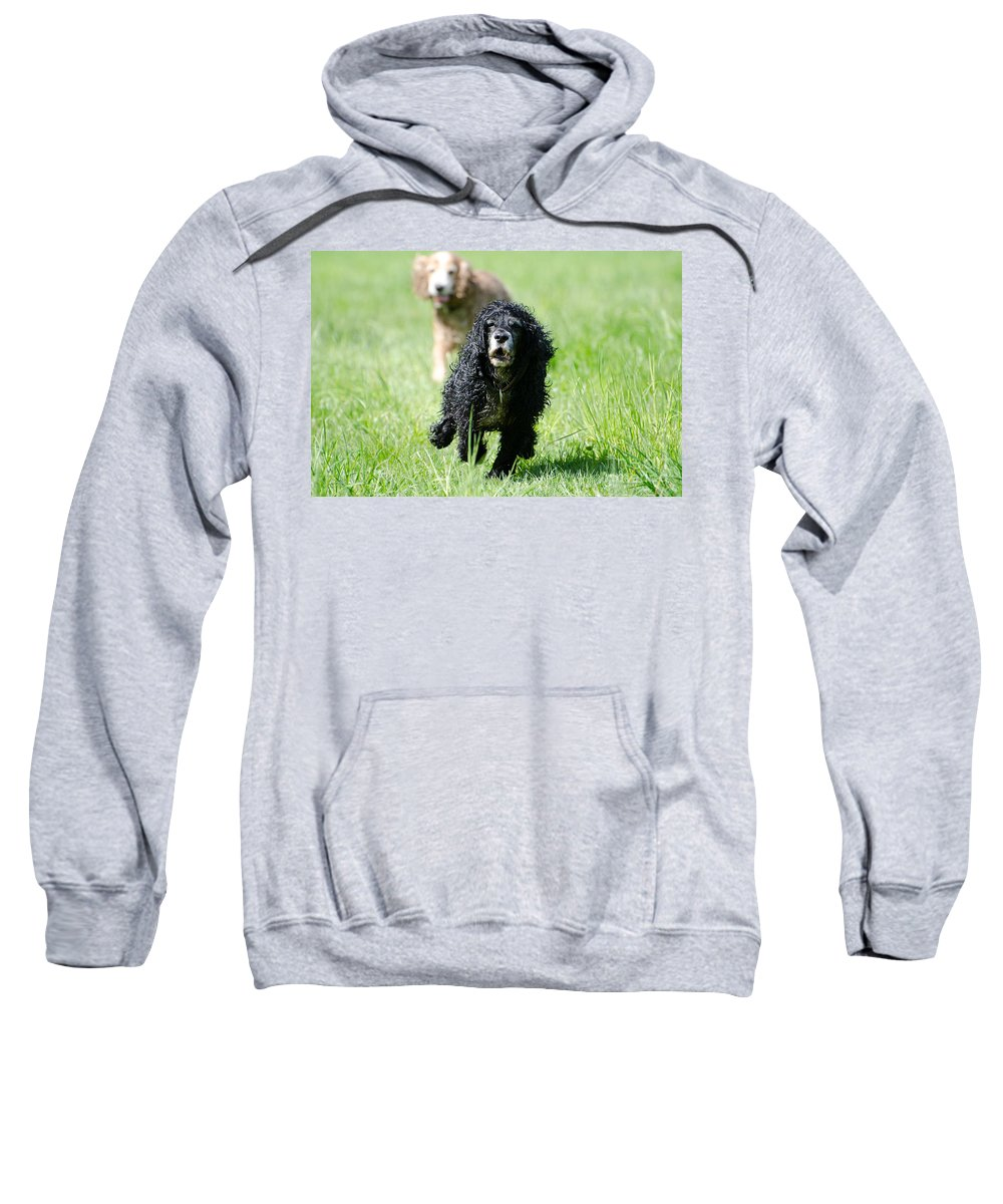 Dog Sweatshirt featuring the photograph Dogs Running On The Green Field by Mats Silvan