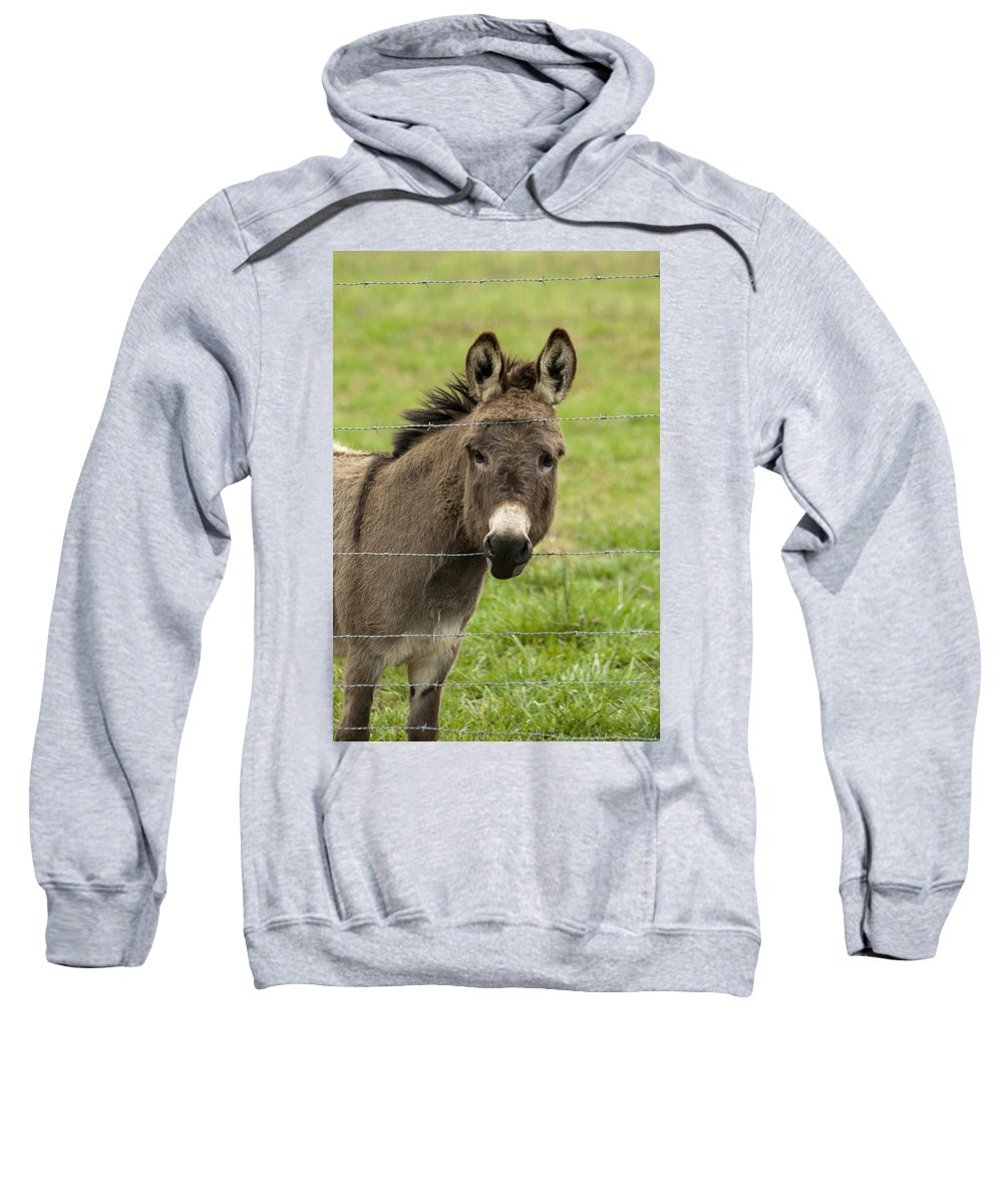 Donkey Sweatshirt featuring the photograph Donkey - The Beast Of Burden by Kathy Clark