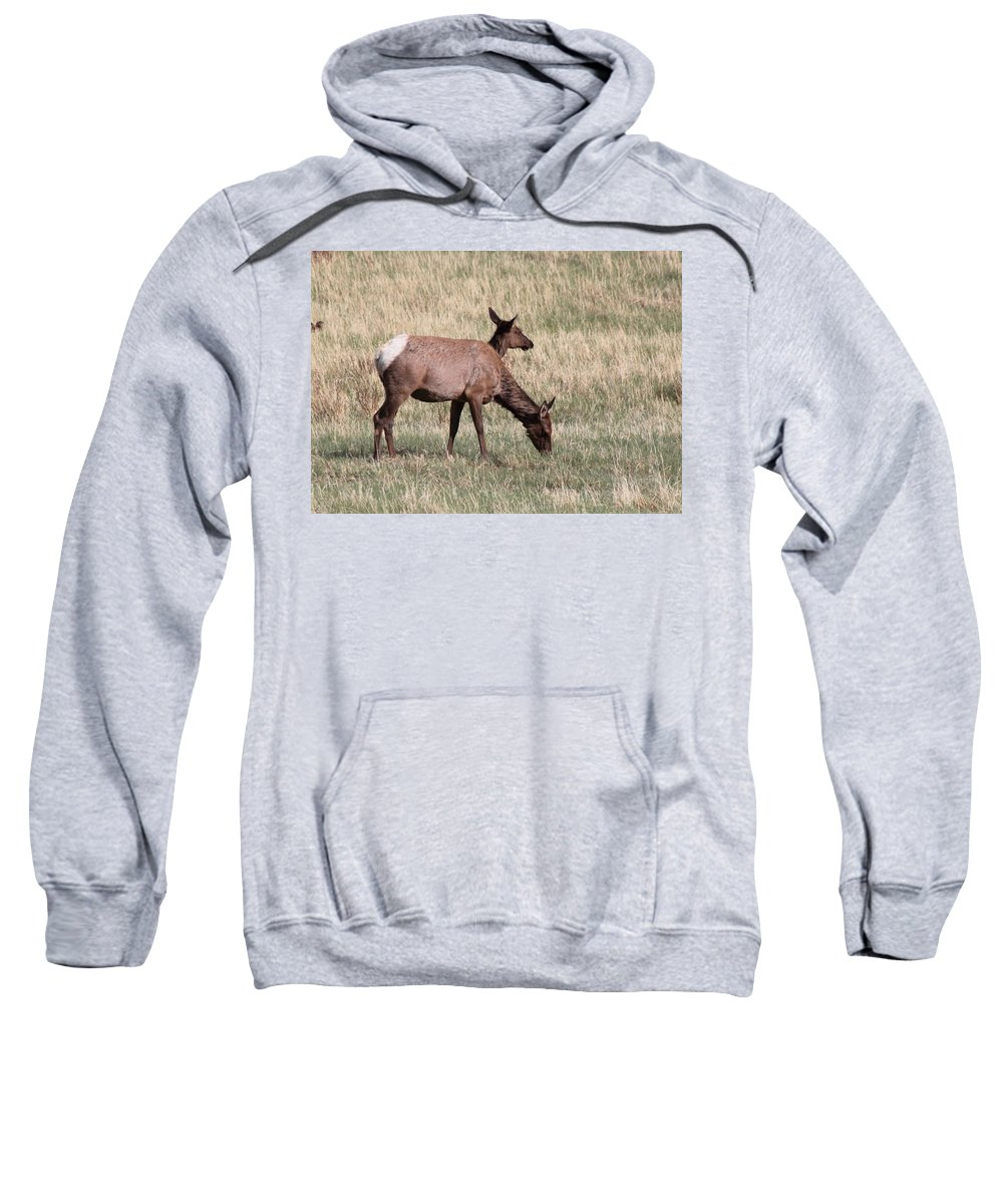 Elk Sweatshirt featuring the photograph Double Vision by Dana Bechler