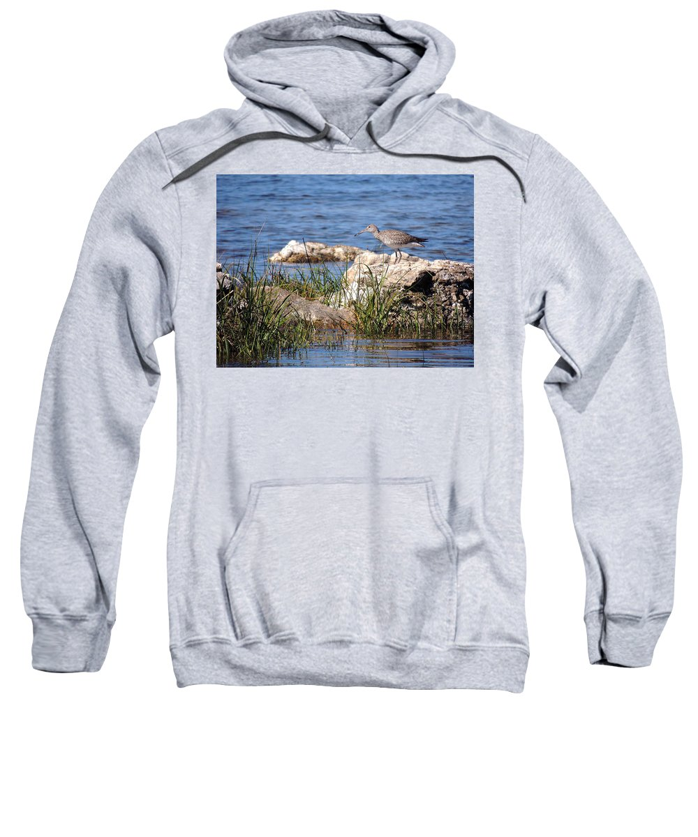 Birds Sweatshirt featuring the photograph Dowitcher by Marilyn Holkham