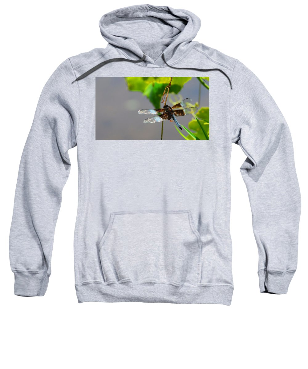 Insects Sweatshirt featuring the photograph Dragonfly by Cindy Manero