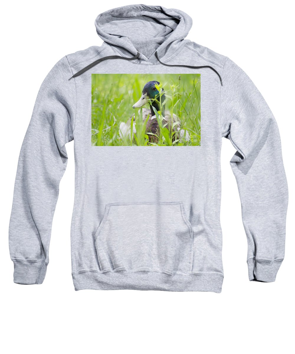 Duck Sweatshirt featuring the photograph Duck In The Green Grass by Mats Silvan