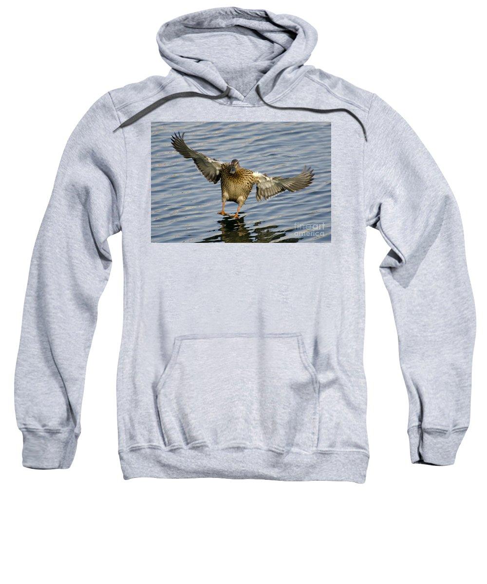 Duck Sweatshirt featuring the photograph Duck Landing by Mats Silvan