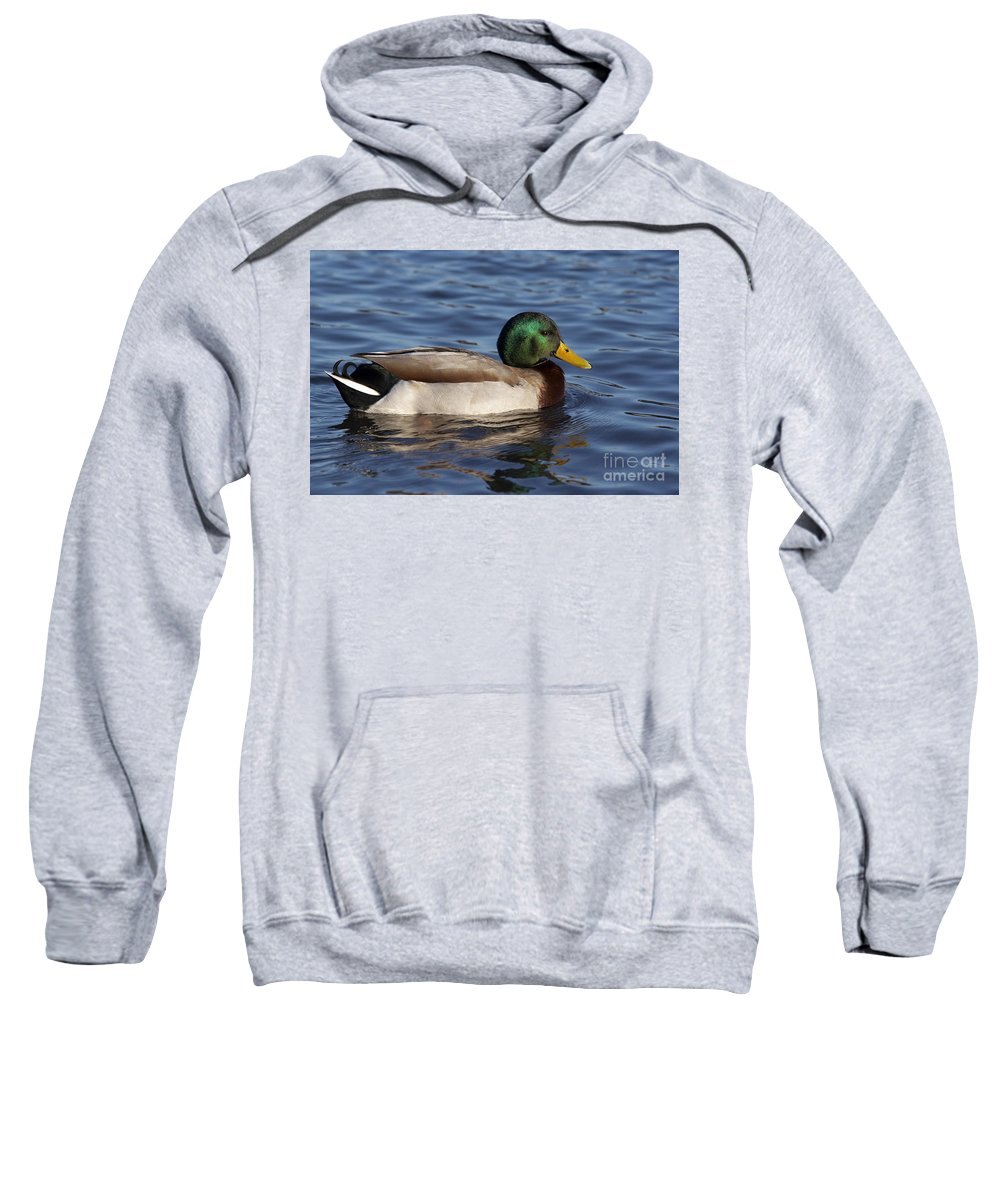 Nature Sweatshirt featuring the photograph Duck On The Water by Michal Boubin