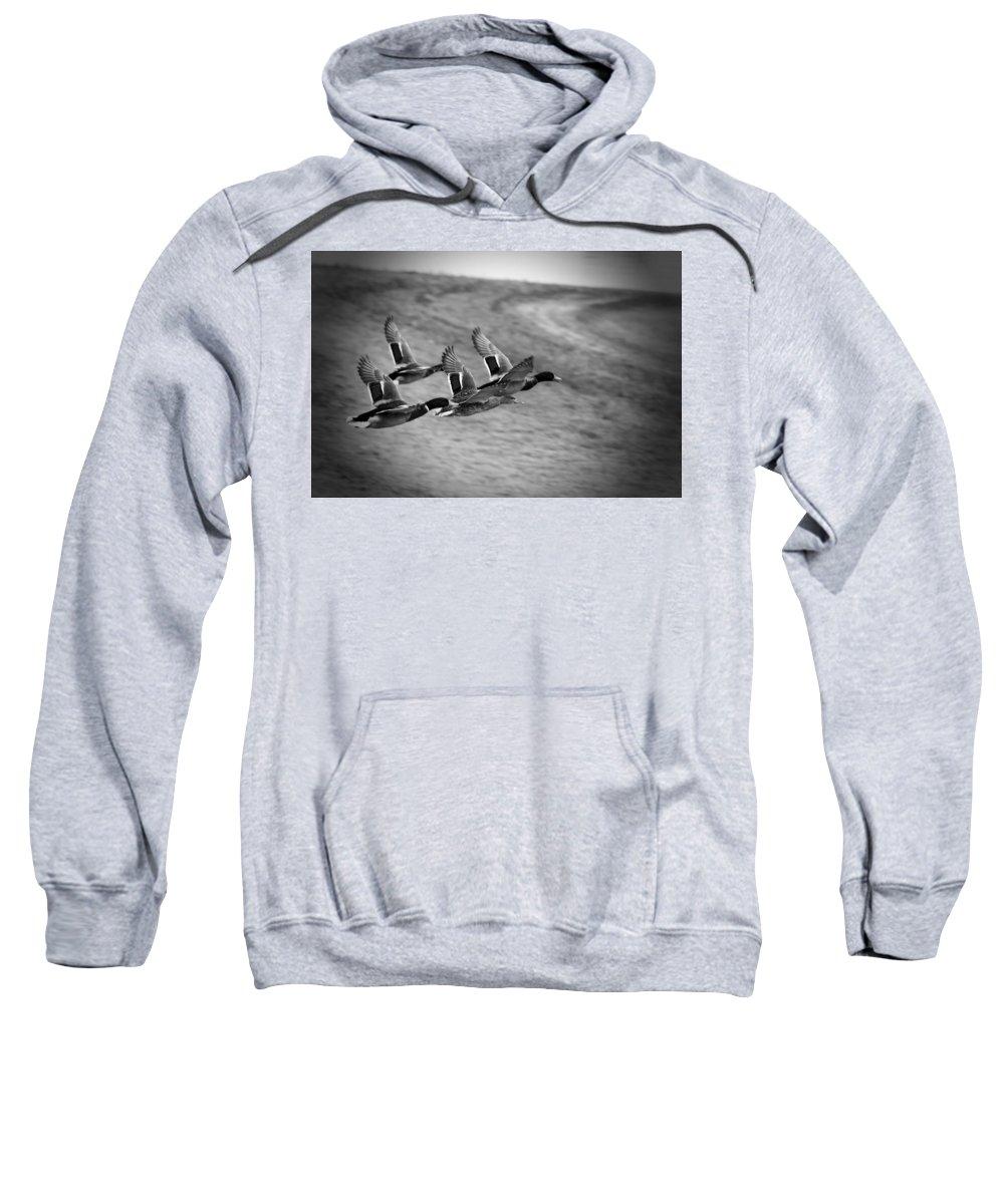 Ducks In Flight Sweatshirt featuring the photograph Ducks In Flight V2 Bw by Douglas Barnard