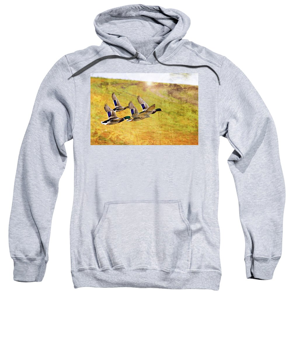 Ducks In Flight Sweatshirt featuring the photograph Ducks In Flight V4 by Douglas Barnard