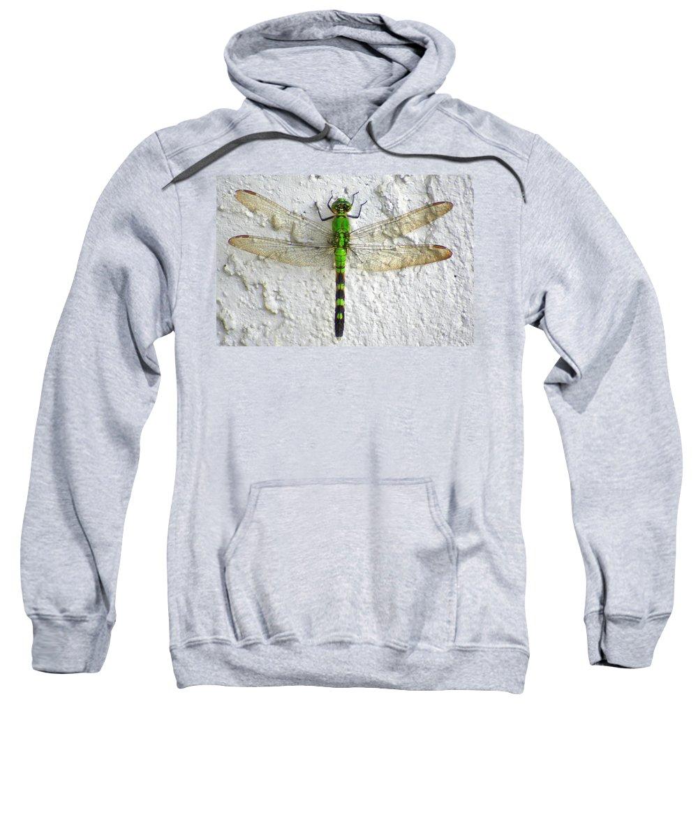 Eastern Pondhawk Dragonfly Sweatshirt featuring the photograph Eastern Pondhawk Dragonfly by Laurel Talabere