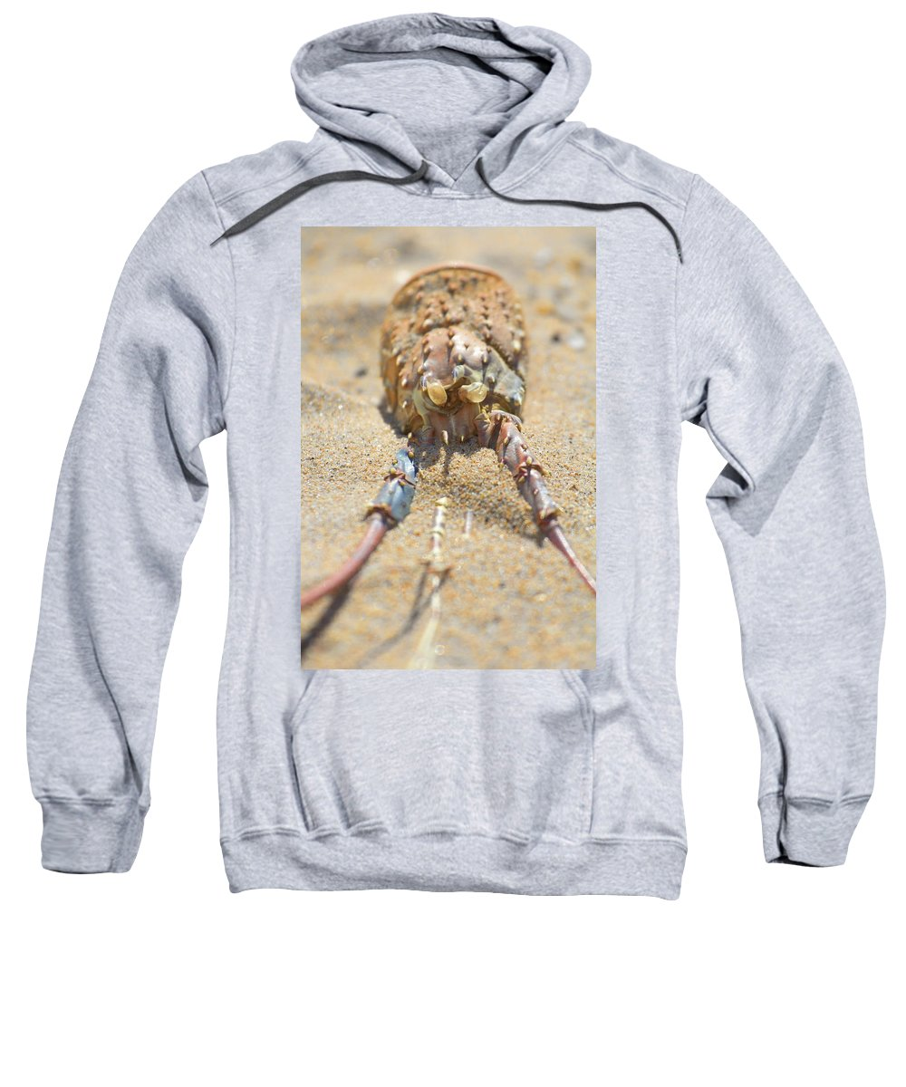 Crustacean Sweatshirt featuring the photograph End Of Life V2 by Douglas Barnard
