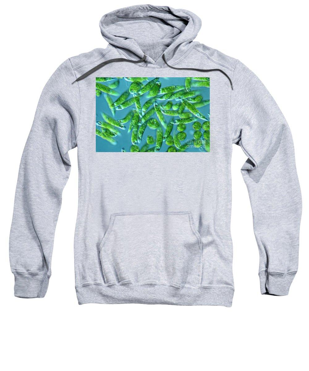 Light Microscopy Sweatshirt featuring the photograph Euglena by M. I. Walker