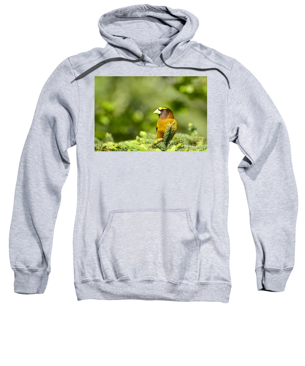 Bird Sweatshirt featuring the photograph Evening Grosbeak by Teresa Zieba