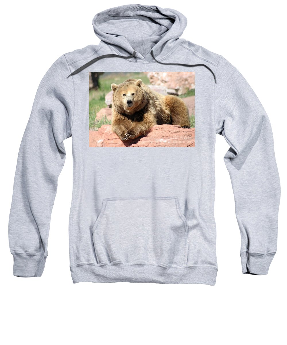 Bear Sweatshirt featuring the photograph Eye To Eye by Living Color Photography Lorraine Lynch