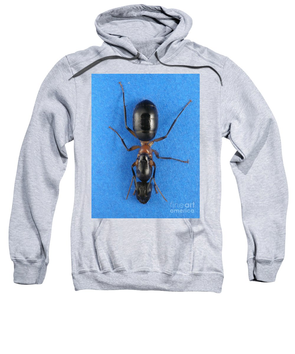 Formicidae Sweatshirt featuring the photograph Field Ant by Raul Gonzalez Perez