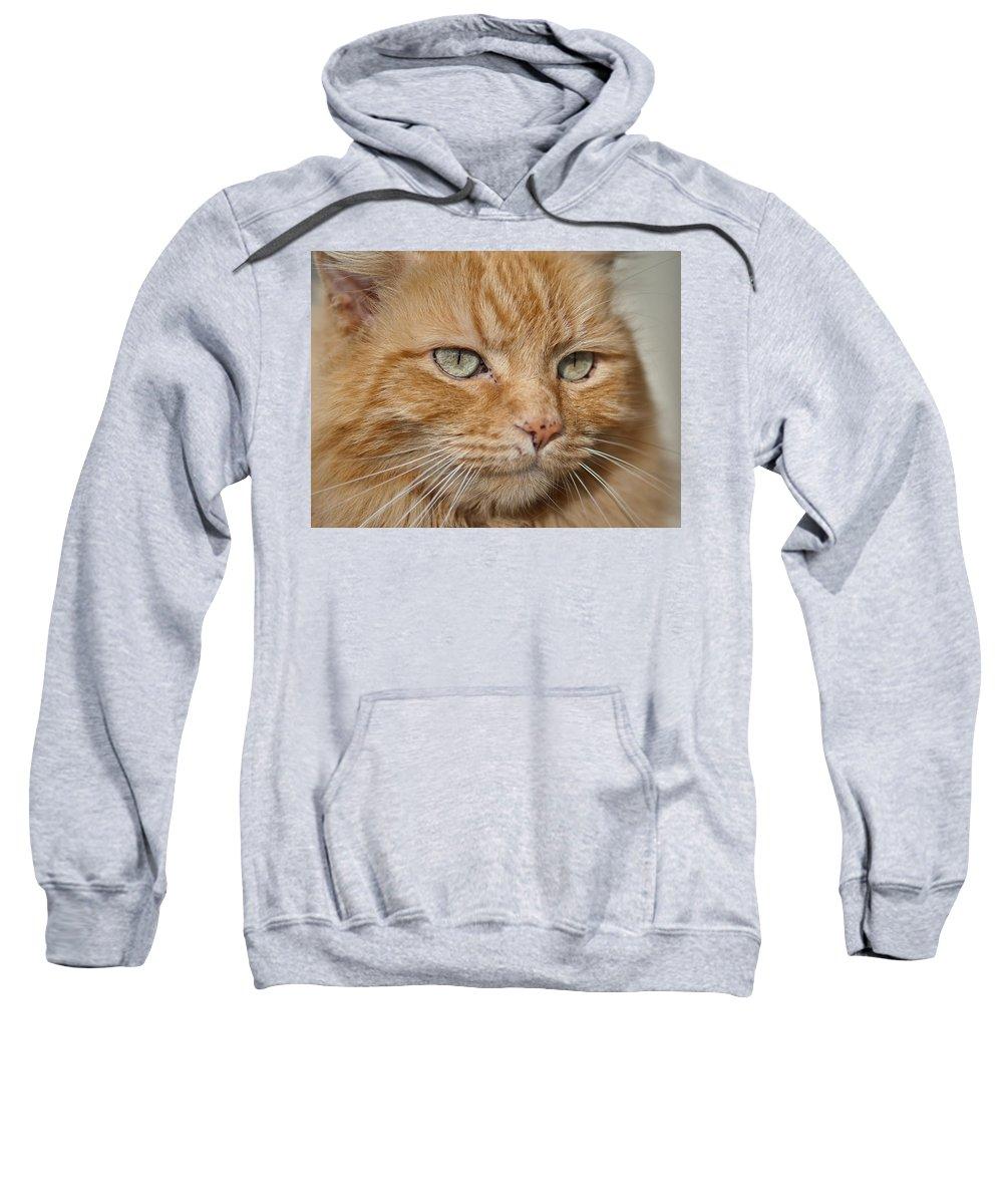 Cat Sweatshirt featuring the photograph Fierce Warrior Kitty by Greg Nyquist