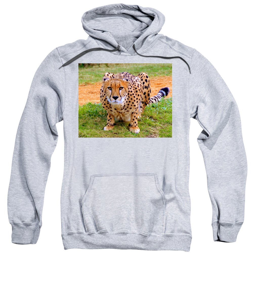 Cheetah Sweatshirt featuring the photograph Focused by David Lee Thompson