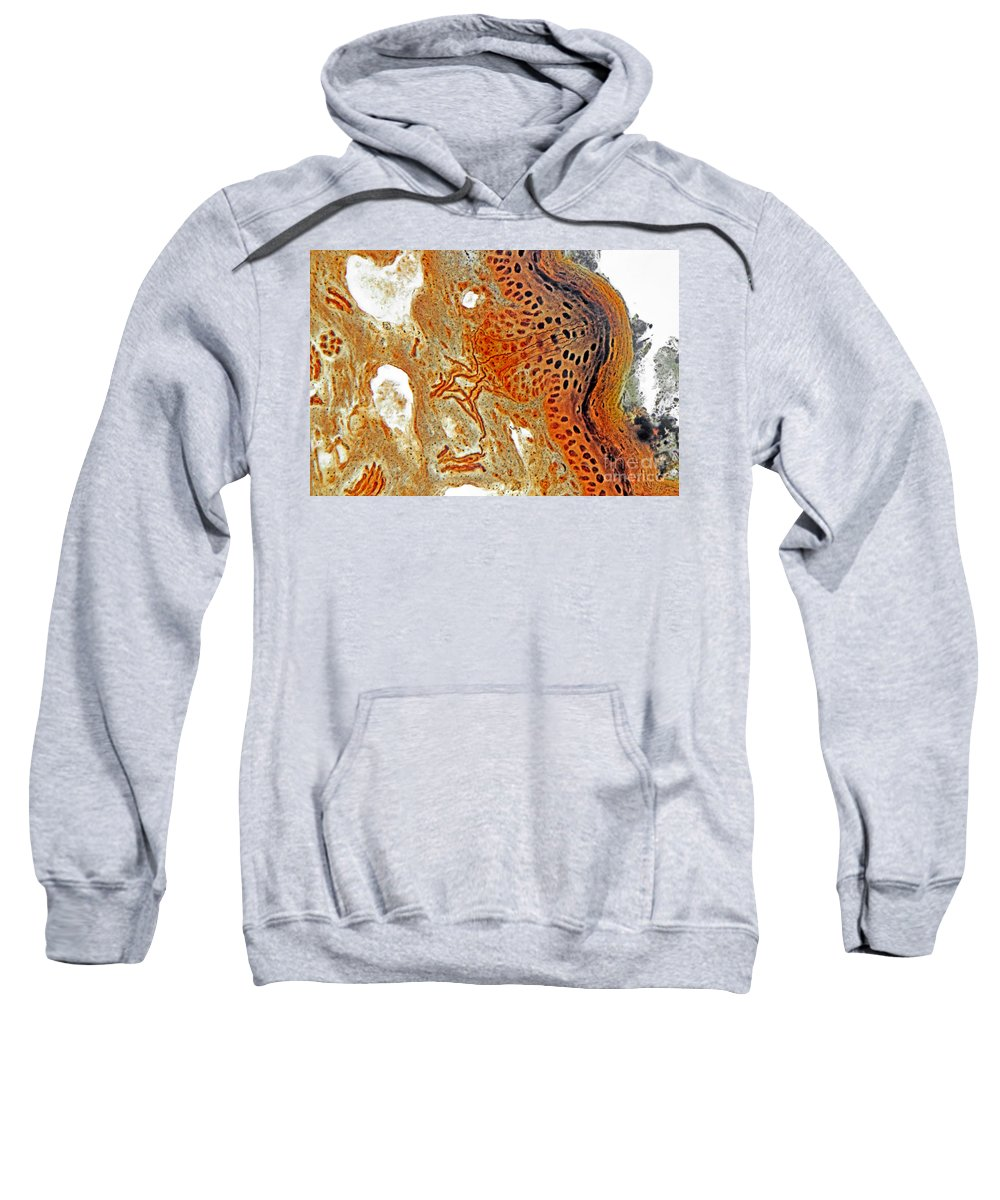 Histology Sweatshirt featuring the photograph Free Nerve-endings, Epidermis by M. I. Walker