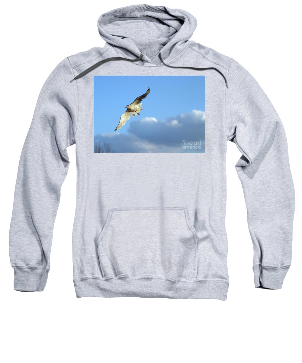 Bird Sweatshirt featuring the photograph Free Spirit by Living Color Photography Lorraine Lynch
