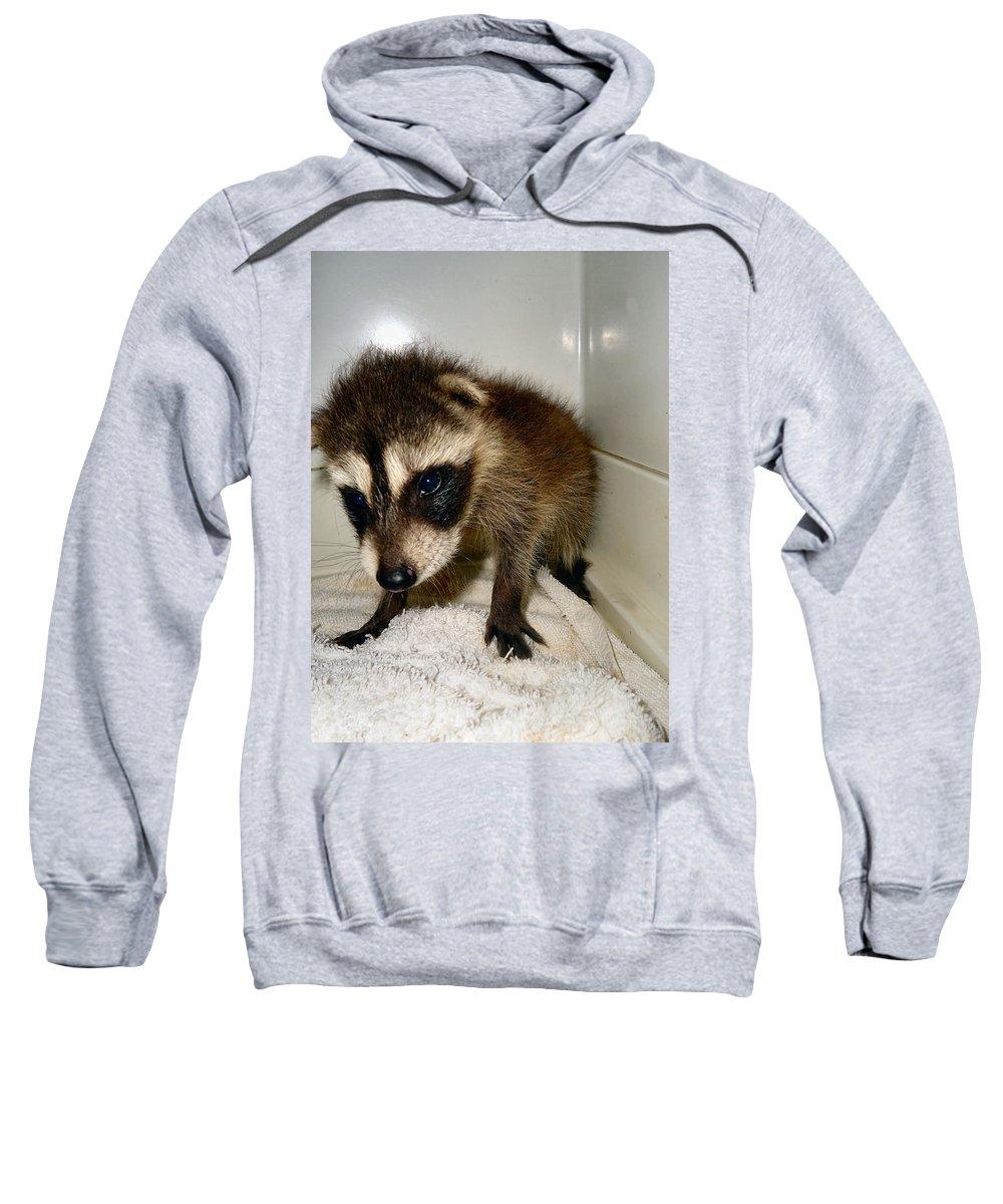 Raccoon Sweatshirt featuring the photograph Gentleness by Art Dingo