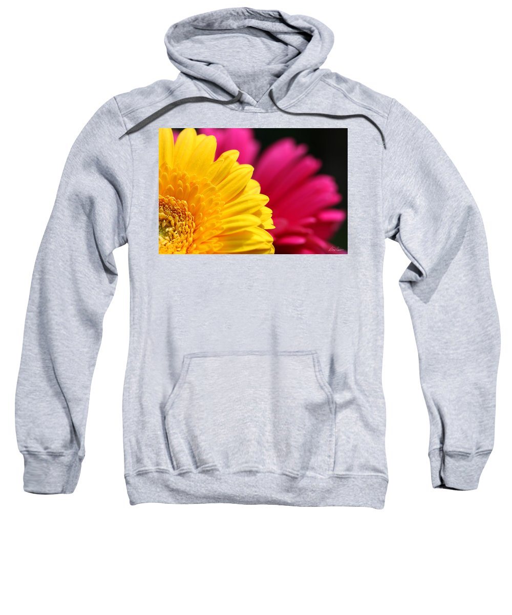 Daisies Sweatshirt featuring the photograph Gerbera Daisies by Diana Haronis