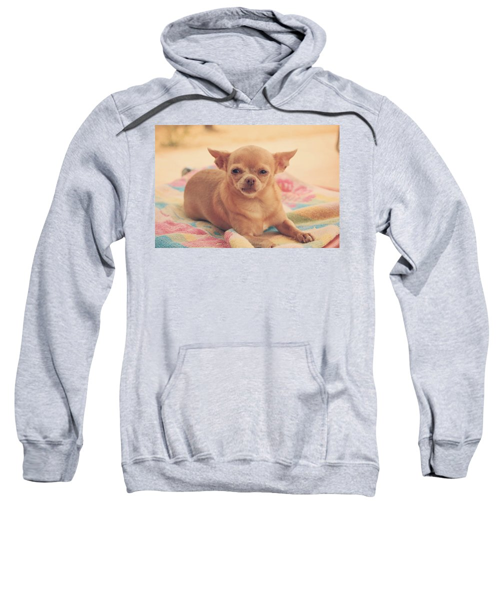 Dogs Sweatshirt featuring the photograph Getting Sleepy by Laurie Search