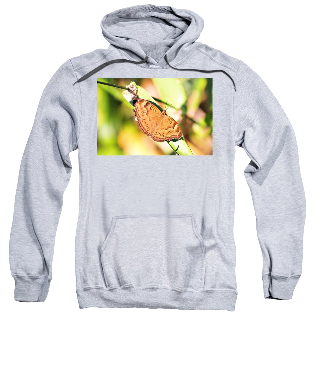 Butterfly Sweatshirt featuring the photograph Golden Butterfly by Douglas Barnard