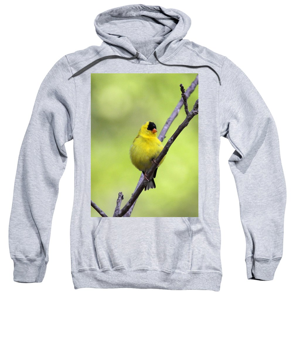Goldfinch Sweatshirt featuring the photograph Goldfinch - All Puffed Up by Travis Truelove