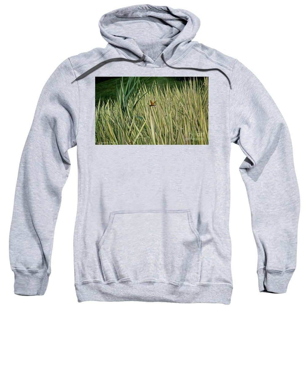 Outdoors Sweatshirt featuring the photograph Green And Gold by Susan Herber