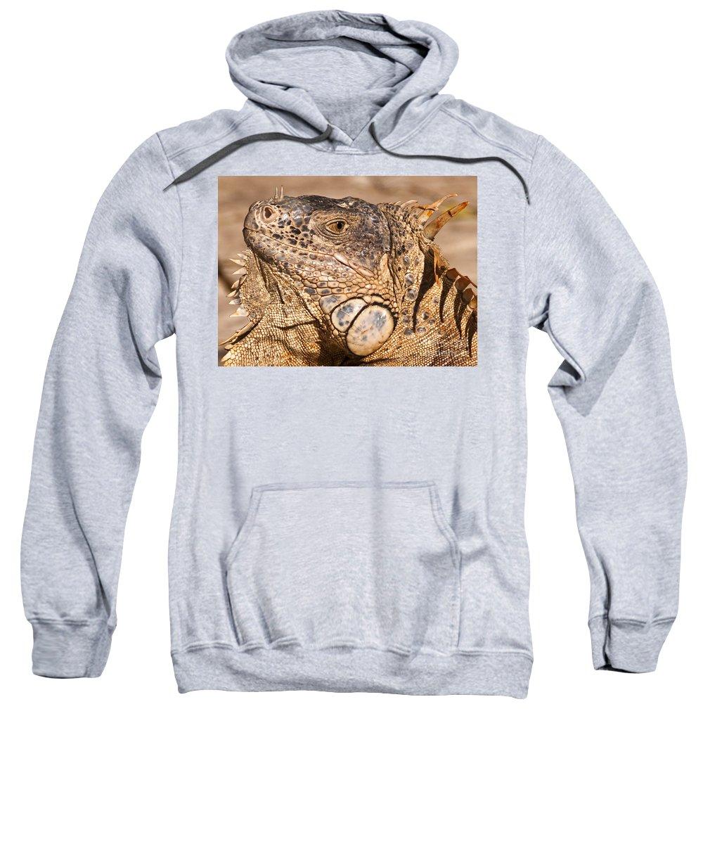 Animal Sweatshirt featuring the photograph Green Iguana by Charles Dobbs
