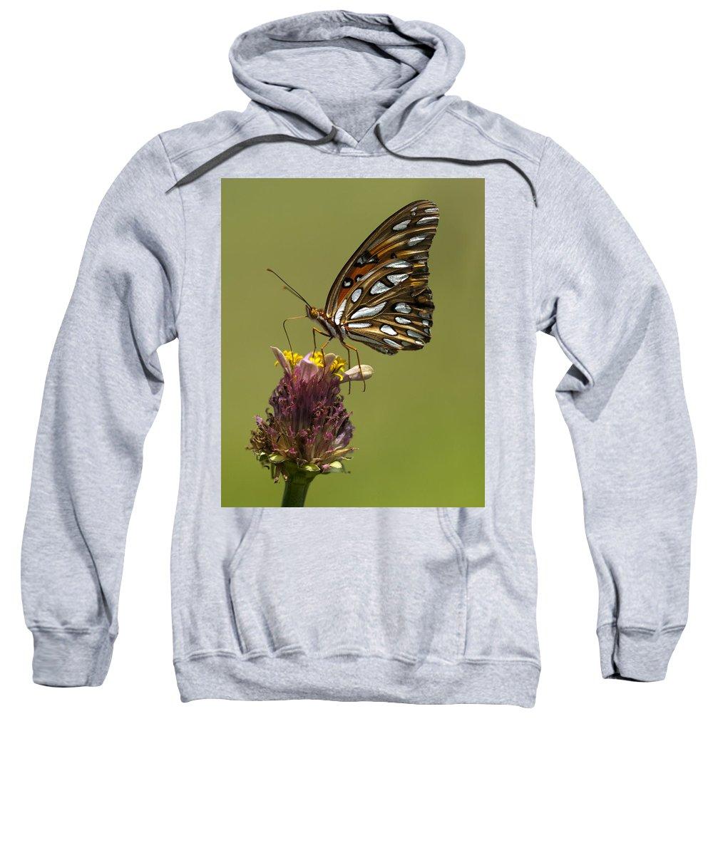 Agraulis Vanillae Sweatshirt featuring the photograph Gulf Fritillary Butterfly - Agraulis Vanillae by Kathy Clark