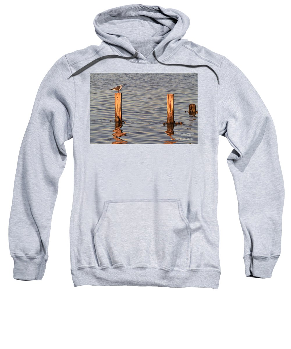 Gull Sweatshirt featuring the photograph Gull At Sunset by Louise Heusinkveld