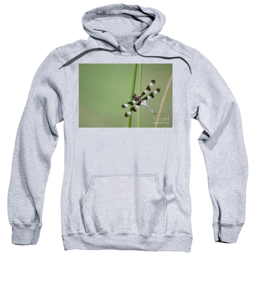 Insects Sweatshirt featuring the photograph Hang On by Living Color Photography Lorraine Lynch