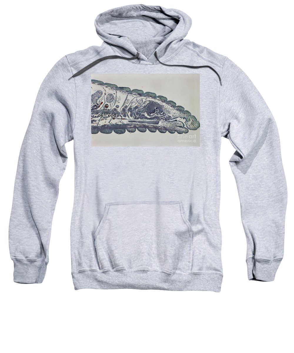 Chaeta Sweatshirt featuring the photograph Head Of An Earthworm by M. I. Walker