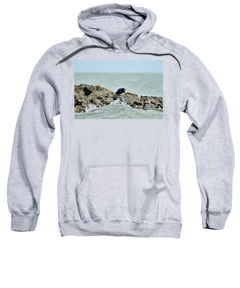 Dark Reef Egret Sweatshirt featuring the photograph High Tide by Douglas Barnard