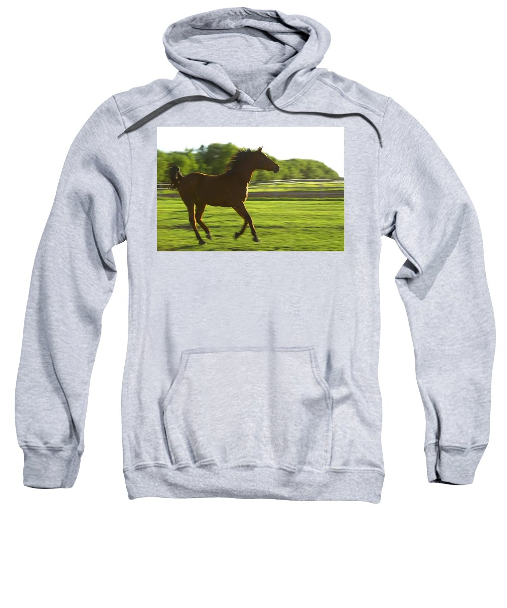 Country Sweatshirt featuring the photograph Horse Galloping by Colette Scharf