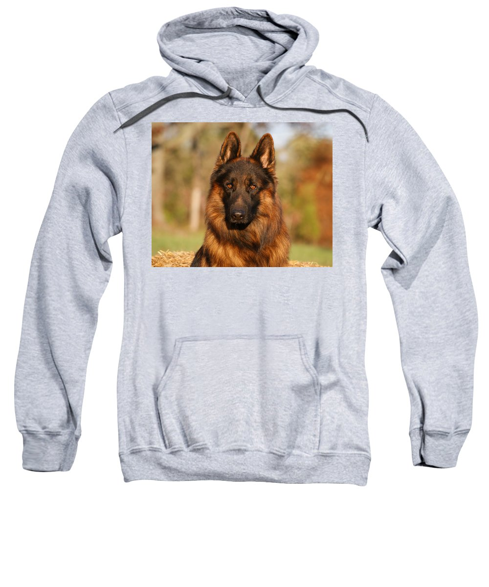 German Shepherd Sweatshirt featuring the photograph Hoss In Autumn by Sandy Keeton