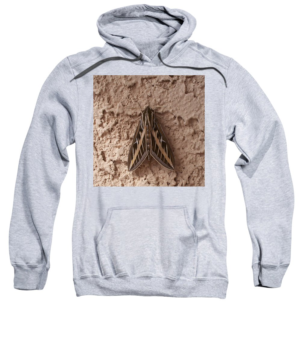 Moth Sweatshirt featuring the photograph Huge Moth On Stucco In Las Vegas by Carl Deaville