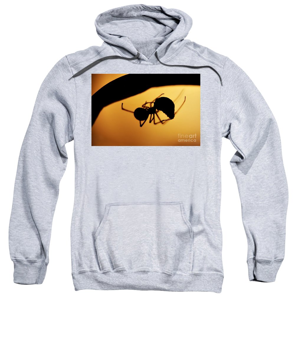 Spider Sweatshirt featuring the photograph Hunter by Michal Boubin