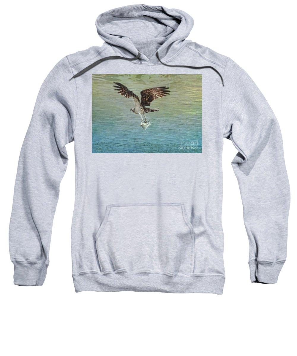 Osprey Sweatshirt featuring the photograph I Finally Caught It by Deborah Benoit