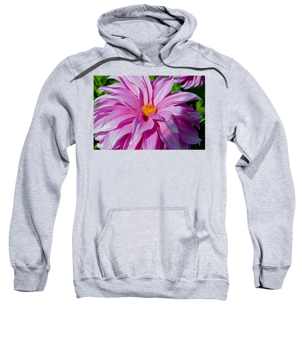 Ice Pink Sweatshirt featuring the photograph Ice Pink Dahlia by Tikvah's Hope