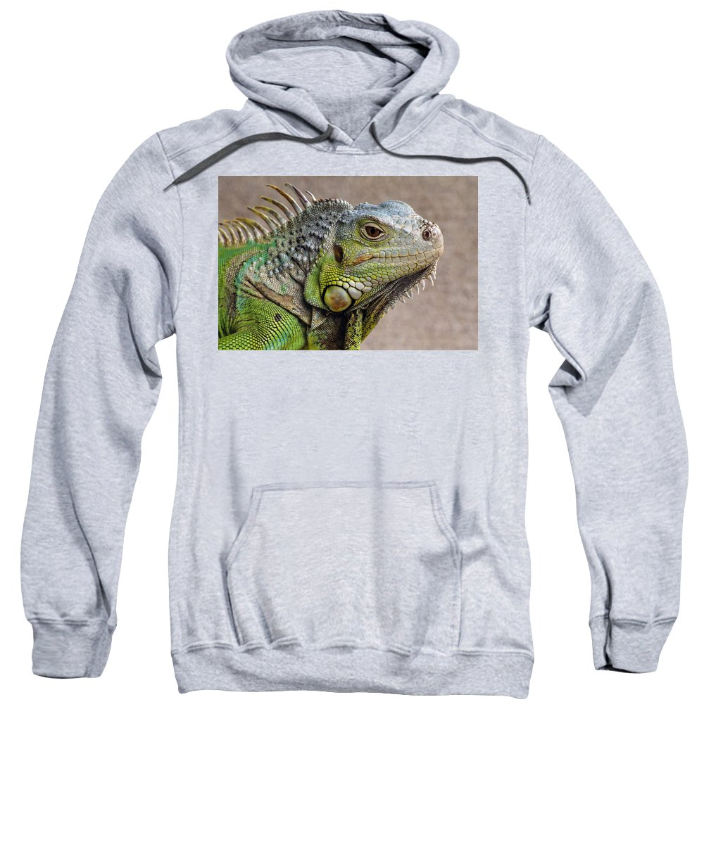 Outdoors Sweatshirt featuring the photograph Iguana Profile by Natural Selection Chris Pinchbeck