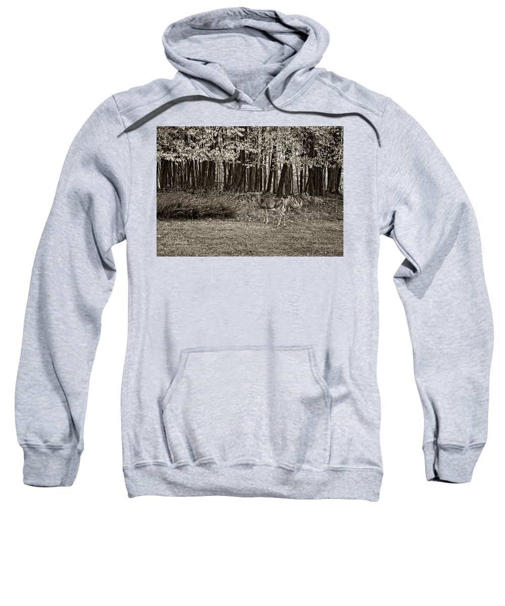 West Virginia Sweatshirt featuring the photograph In A Yellow Wood Sepia by Steve Harrington