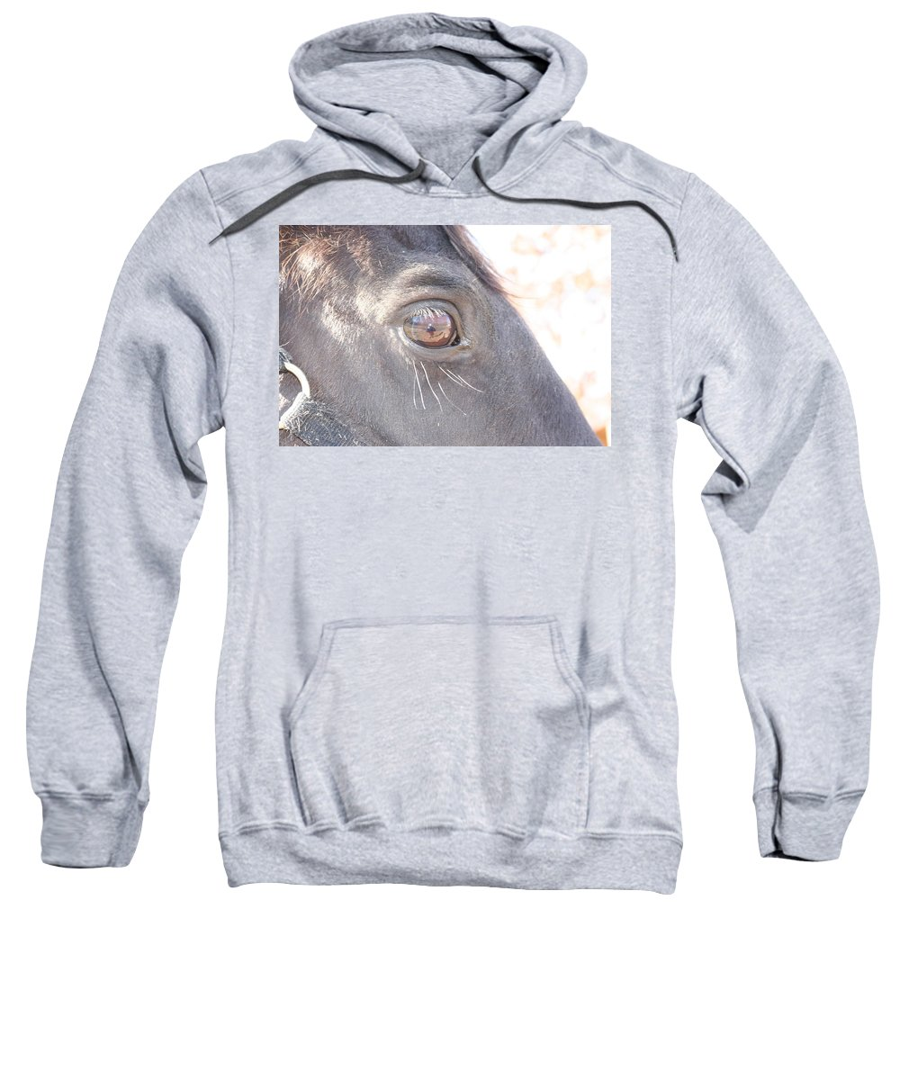 Horse Sweatshirt featuring the photograph Judge by Stephanie Kripa