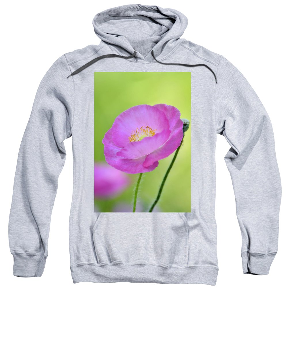 Pink Poppy Sweatshirt featuring the photograph Just Call Me Pink by Saija Lehtonen