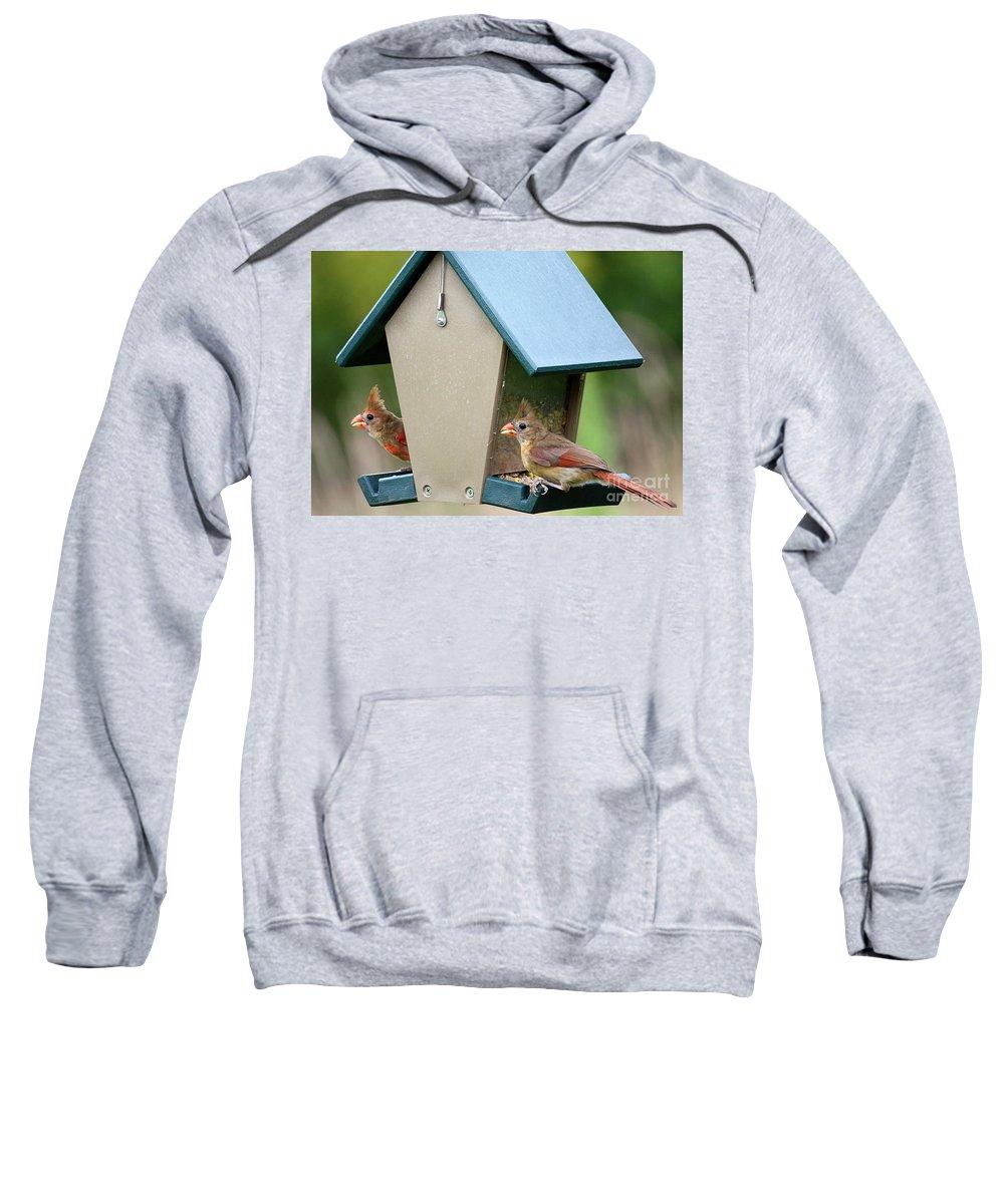 Cardinals Sweatshirt featuring the photograph Juvenile Cardinals On Feeder by Carol Groenen