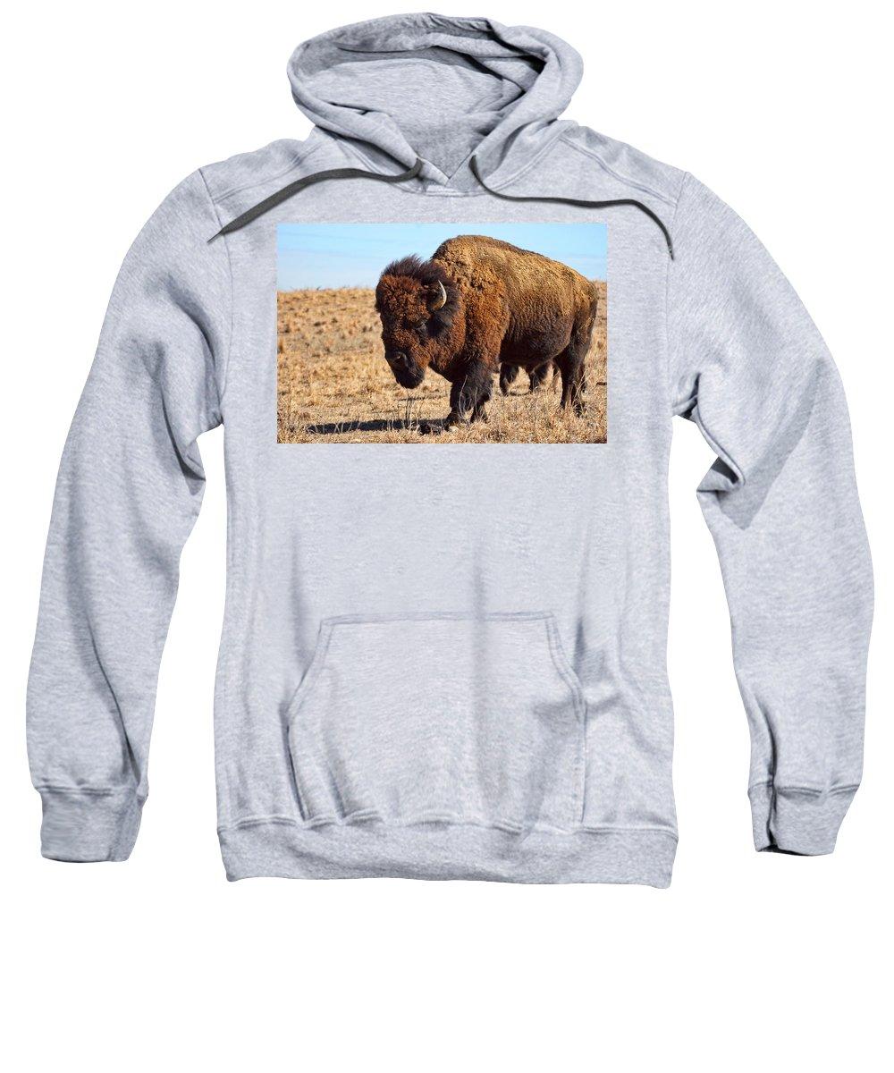 Kansas Sweatshirt featuring the photograph Kansas Buffalo by Alan Hutchins