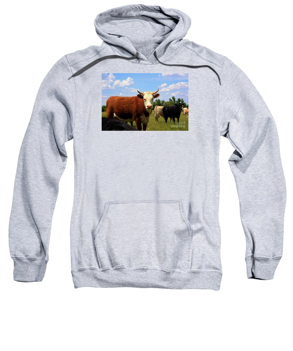 Cow Sweatshirt featuring the photograph Kansas Country Cow's With Blue Sky And Grass by Robert D Brozek