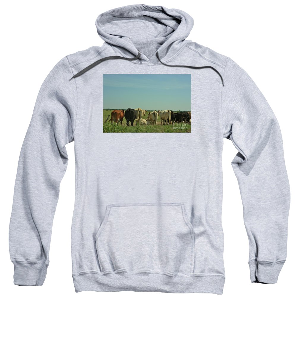 Cow's Sweatshirt featuring the photograph Kansas Cow's With There Backside's To You With Blue Sky And Grass by Robert D Brozek