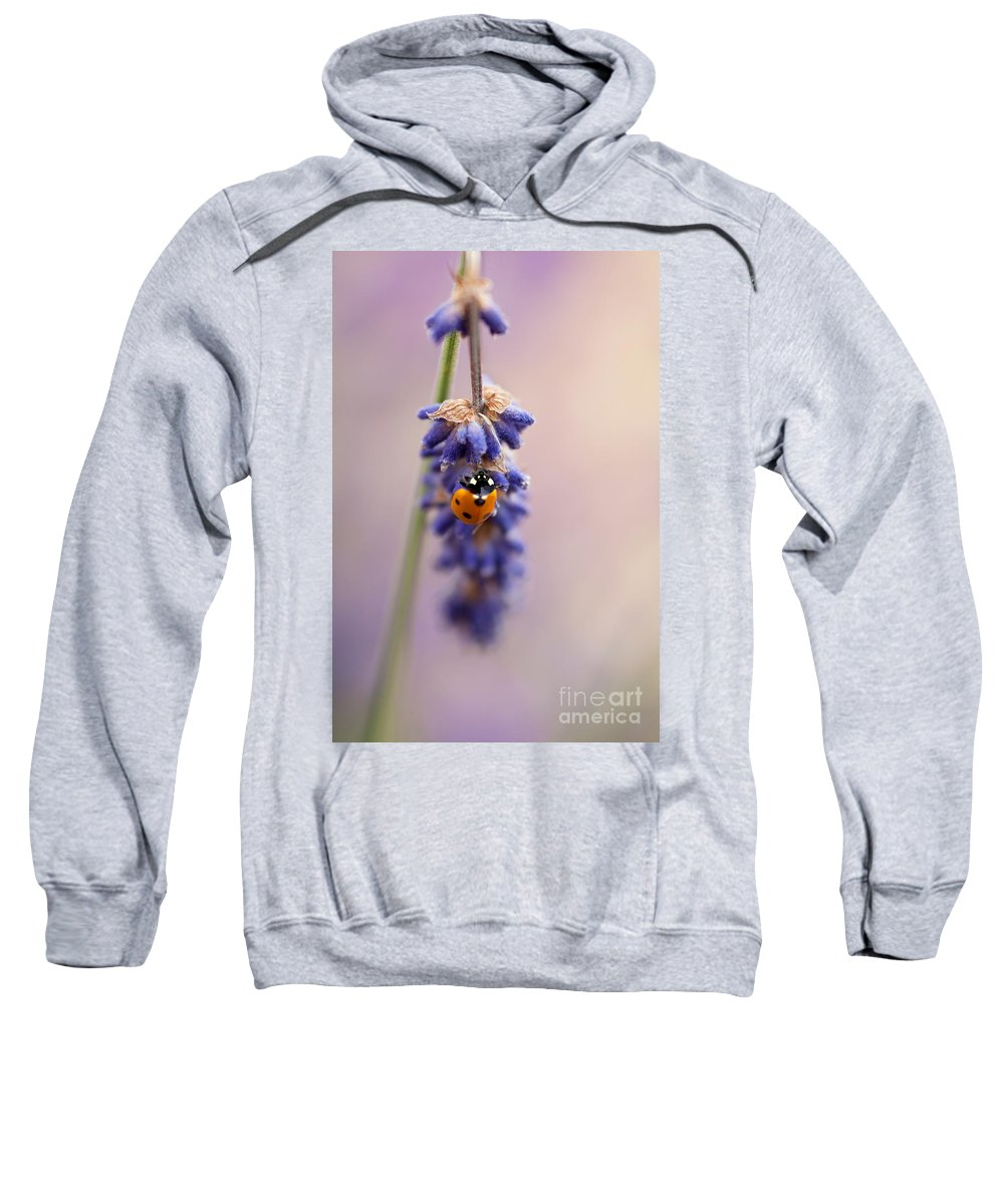 Ladybird Sweatshirt featuring the photograph Ladybird And Lavender by John Edwards