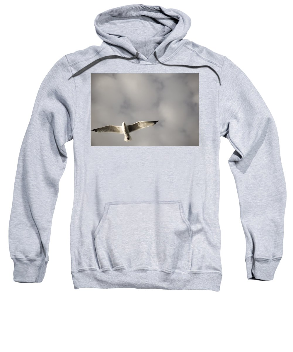 Copy Space Sweatshirt featuring the photograph Lake Of The Woods, Ontario, Canada Bird by Keith Levit