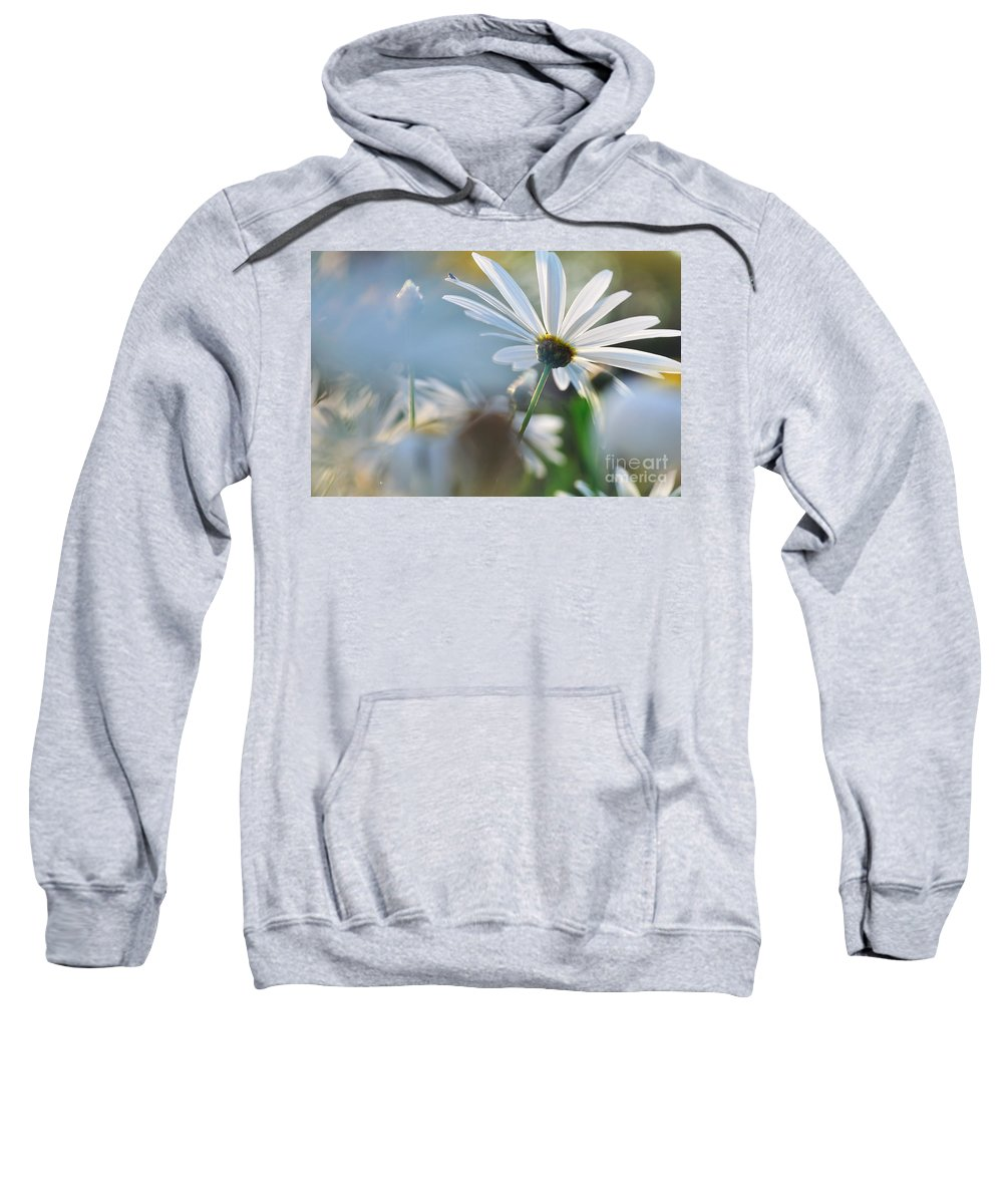 Photography Sweatshirt featuring the photograph Late Sunshine On Daisies by Kaye Menner