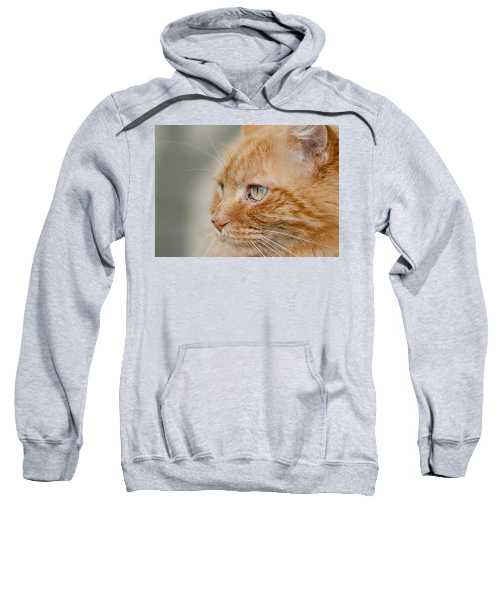 Kitty Sweatshirt featuring the photograph Leo The Kitty Beast by Greg Nyquist